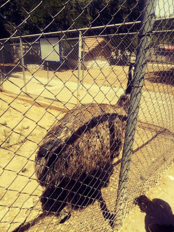 Одиноко запертая птица в клетке зоопарка стоковое изображение