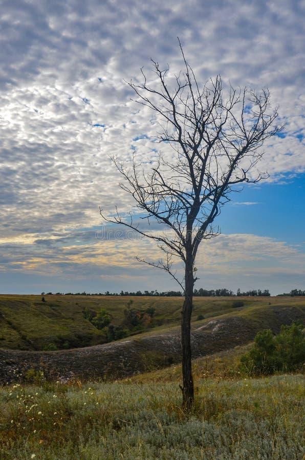 Одиноко сухое дерево стоковые фотографии rf
