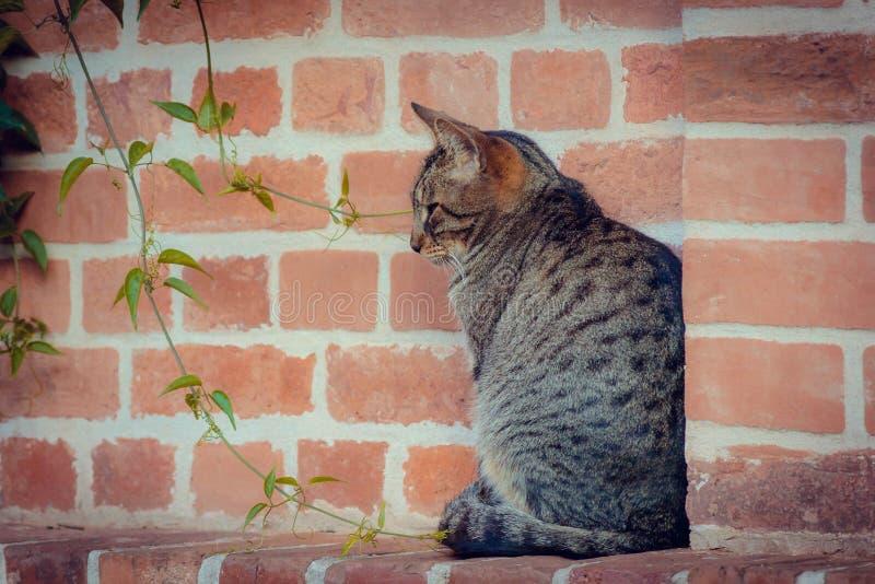 одиночество кот сиротливый стоковое фото