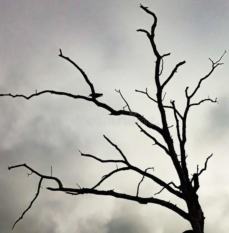 одиночество стоковые фото