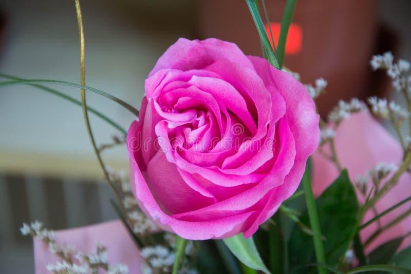 Одиночная красивая розовая роза, конец-вверх цветка в цветочном магазине с зеленой предпосылкой, зацветая розовым букетом на 8-ое стоковое фото rf