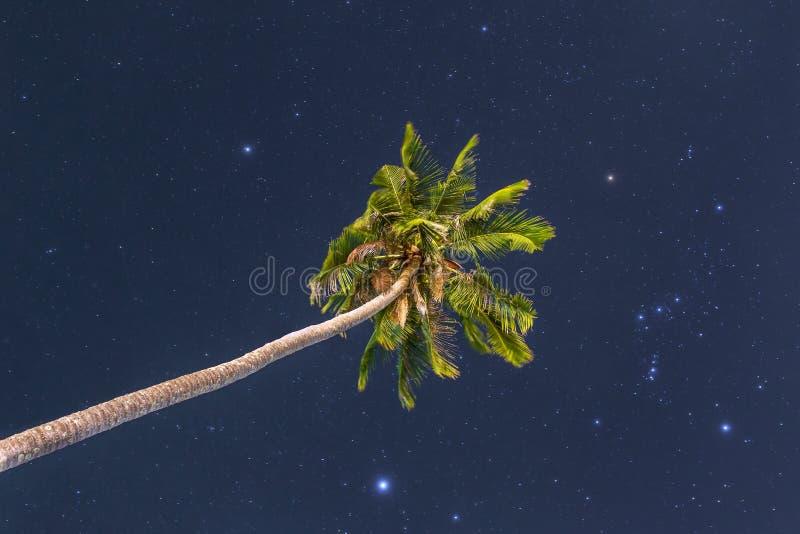 Одиночная пальма на ночном небе стоковое фото rf
