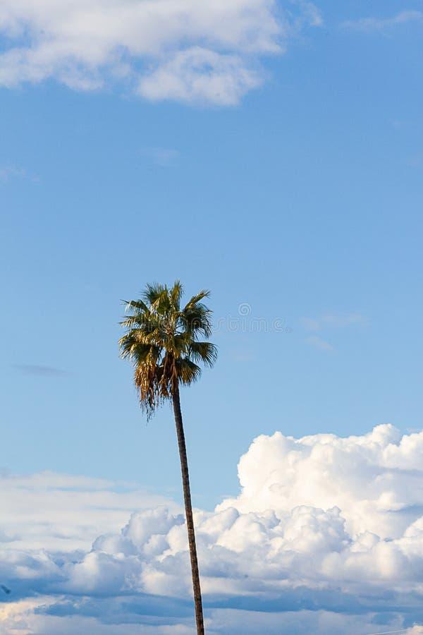 Одиночная пальма против голубого неба и пушистого кумулюса, nimbus, облаков шторма стоковое изображение