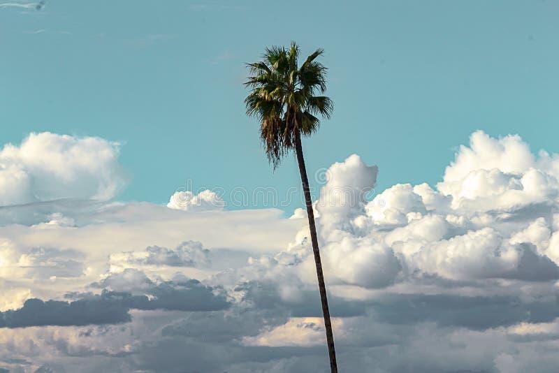 Одиночная пальма против голубого неба и пушистого кумулюса, nimbus, облаков шторма стоковые фото