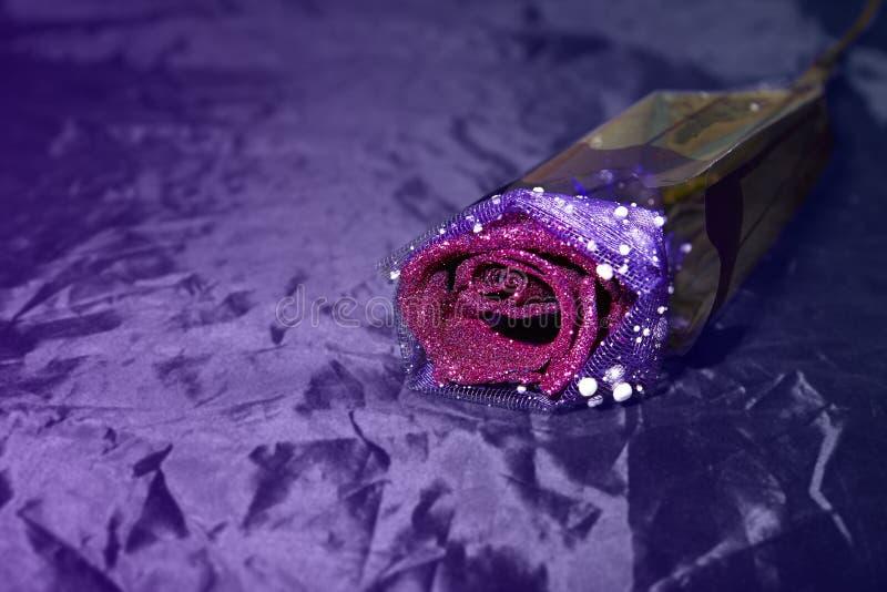 Одиночная роза пурпура на фиолетовой предпосылке стоковое фото