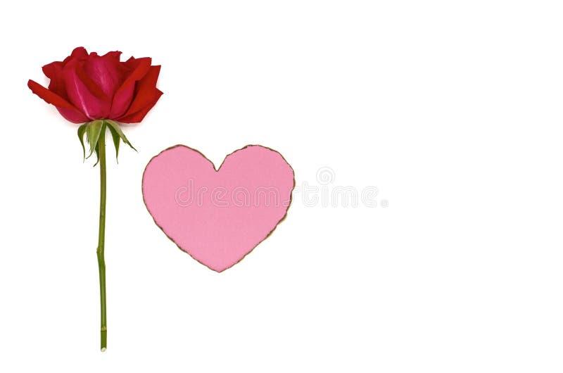 Одиночная свежая красная роза и розовая форма любов цвета стоковое изображение rf