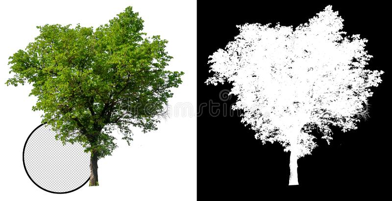 Одиночное дерево с путем клиппирования иллюстрация штока