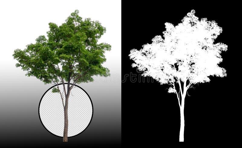 Одиночное дерево с путем клиппирования иллюстрация вектора