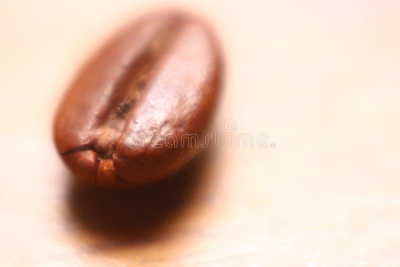 Одиночное кофейное зерно при высокое увеличение и мягкое влияние фокуса создавая сказочное настроение стоковое фото rf