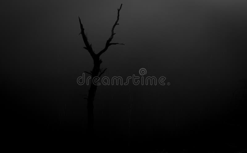 Одиночное мертвое дерево на зоре стоковые фотографии rf