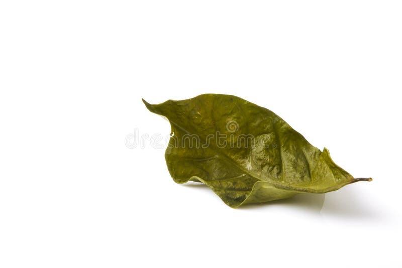 Одиночные сухие зеленые лист лист стоковое фото rf