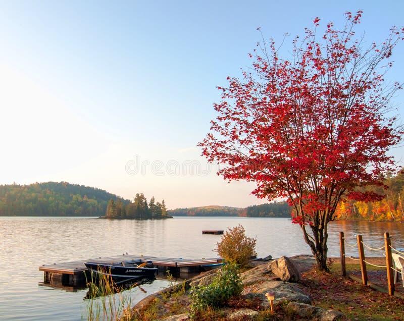 Одиночный вал красного клена рядом с стыковкой озера стоковое фото