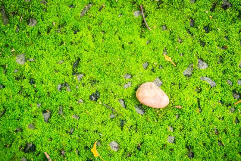 Одиночный высушите разрешение упаденное на зеленую мшистую предпосылку Искусство природы стоковое фото rf