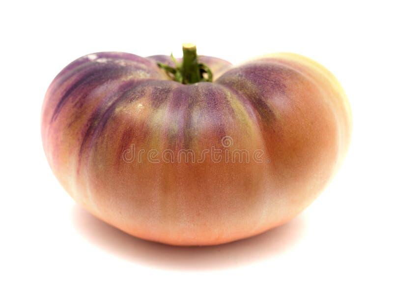 Одиночный голубой томат стоковые фото