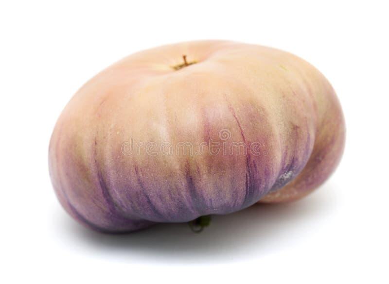 Одиночный голубой томат стоковая фотография rf