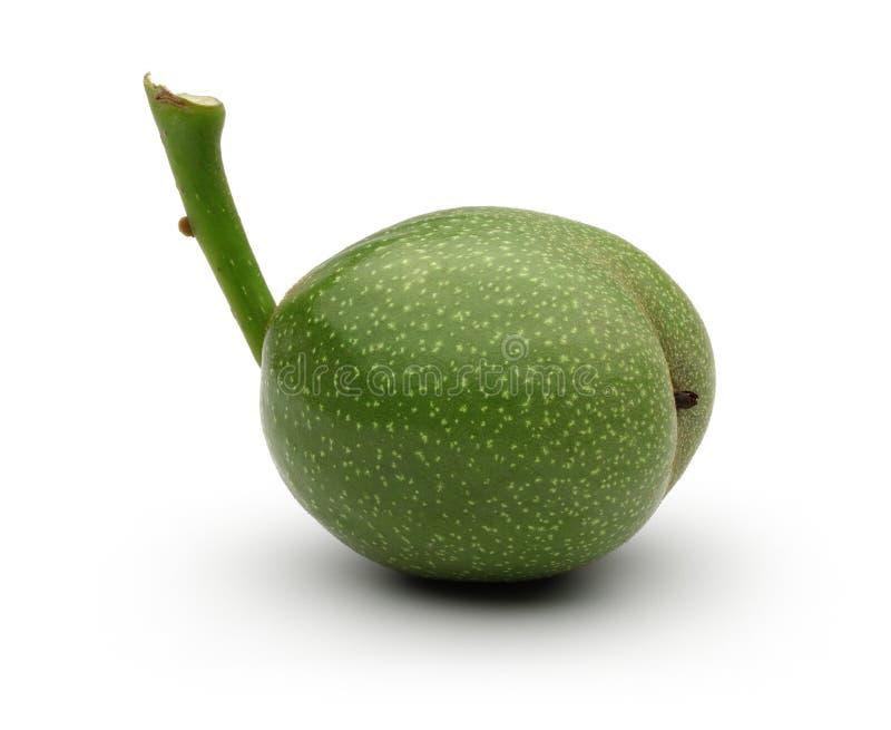 Одиночный зеленый грецкий орех на белой предпосылке стоковые фотографии rf