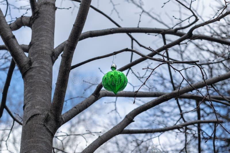 Одиночный зеленый, довольно грустный смотря орнамент рождественской елки, вися от ветви безлистного дерева в центре города стоковое изображение