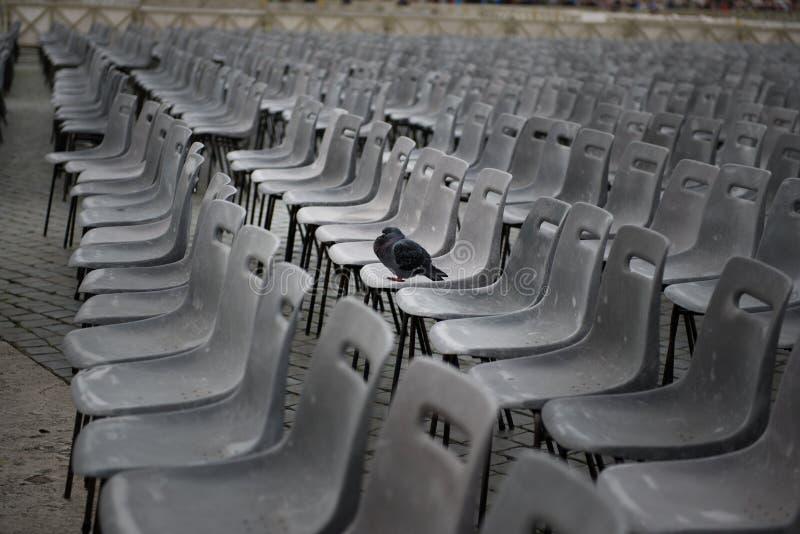 Одиночный зритель в толпе стоковое фото rf