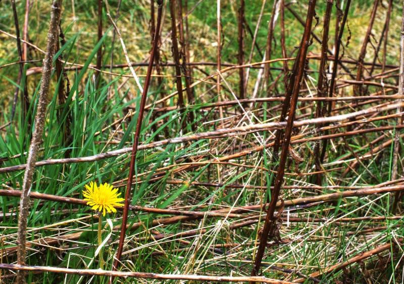 Одиночный красивый цветок в траве стоковые фото