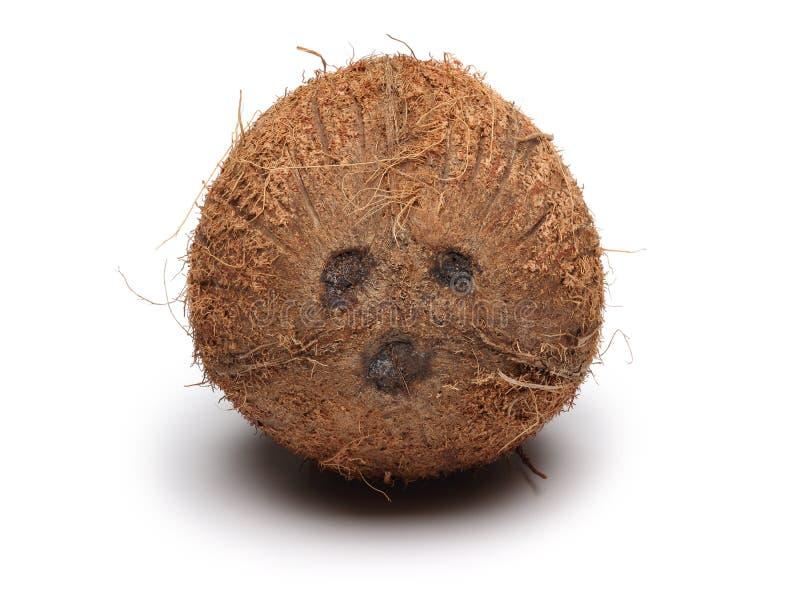 Одиночный плод кокоса изолированный на белизне стоковая фотография rf