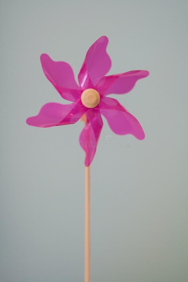 Одиночный розовый pinwheel стоковые изображения