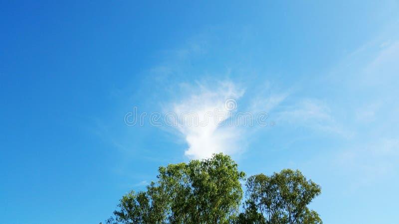 Один вал и голубое небо стоковые фотографии rf