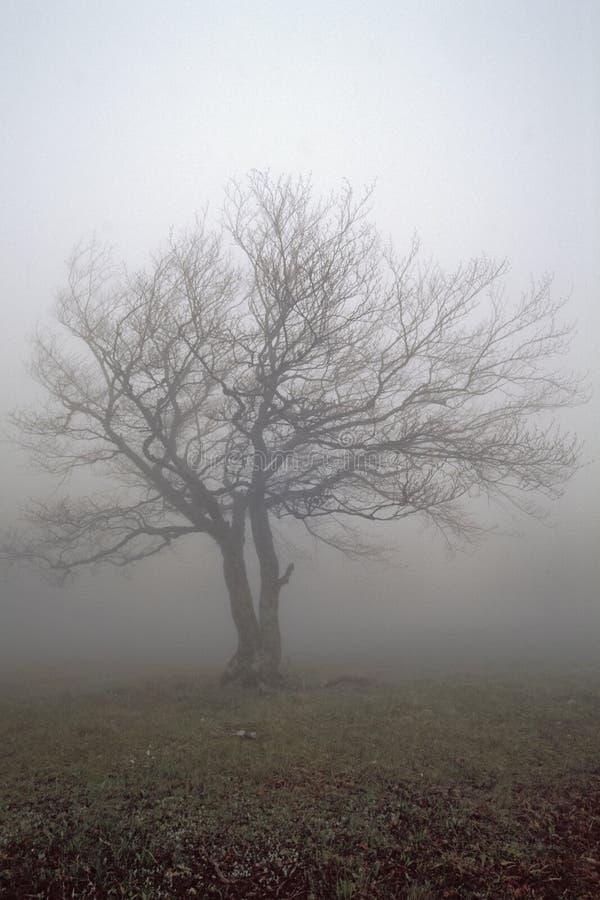 один вал тумана s стоковые фото