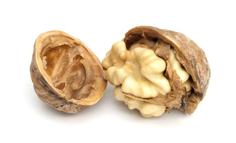 один грецкий орех стоковые фото