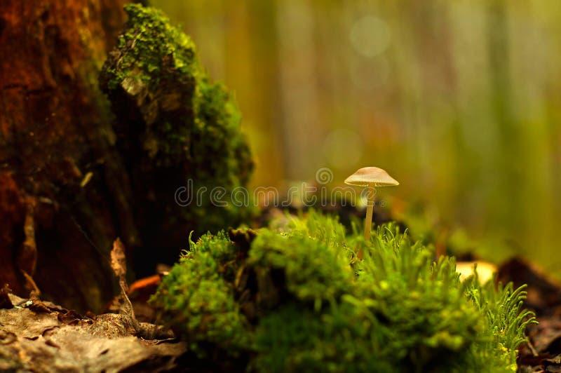 Один гриб растет в конце-вверх леса стоковая фотография