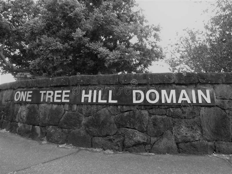 Один домен холма дерева стоковое фото