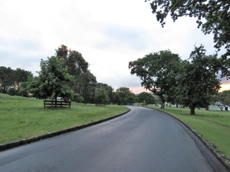 Один домен холма дерева стоковые фото