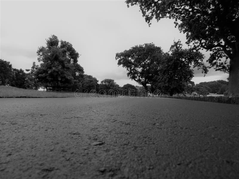 Один домен холма дерева стоковая фотография rf