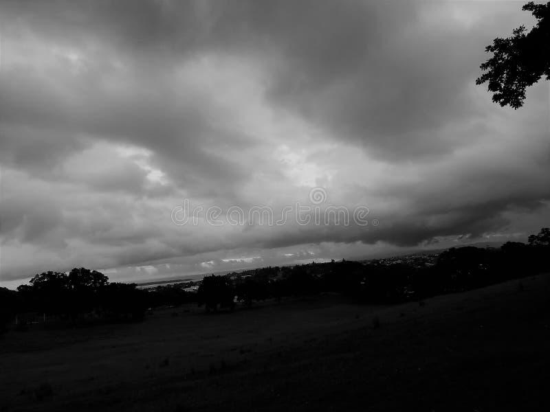 Один домен холма дерева стоковые фотографии rf