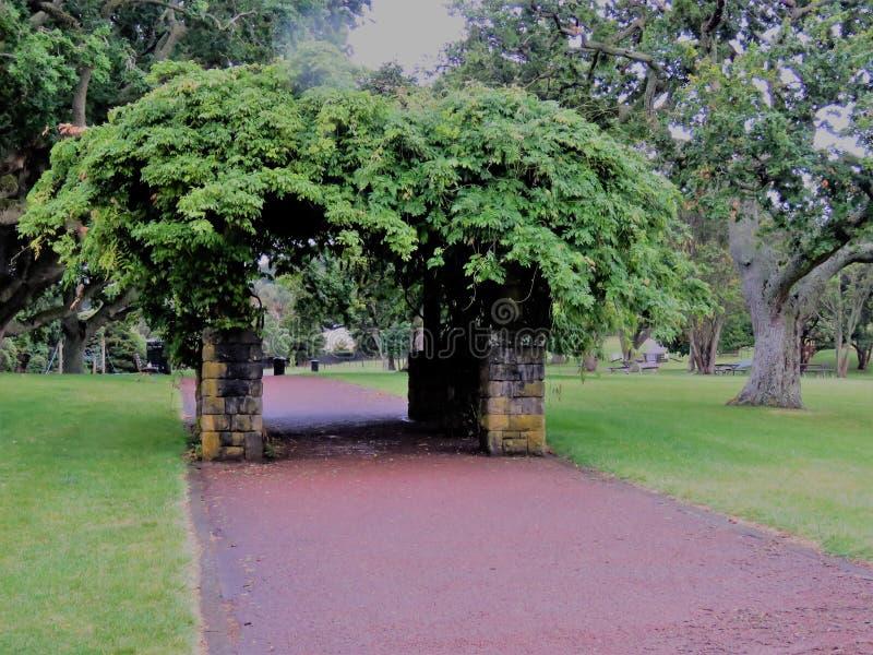 Один домен холма дерева стоковое фото rf