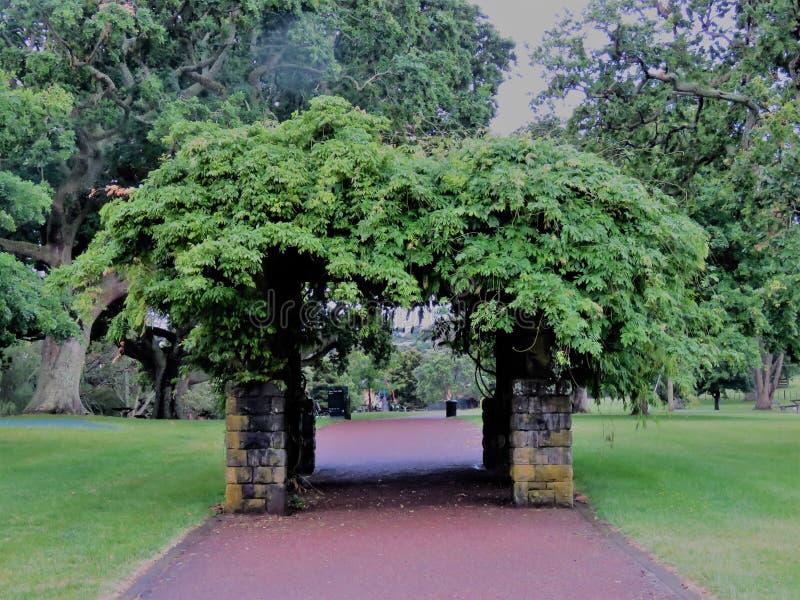 Один домен холма дерева стоковое изображение rf