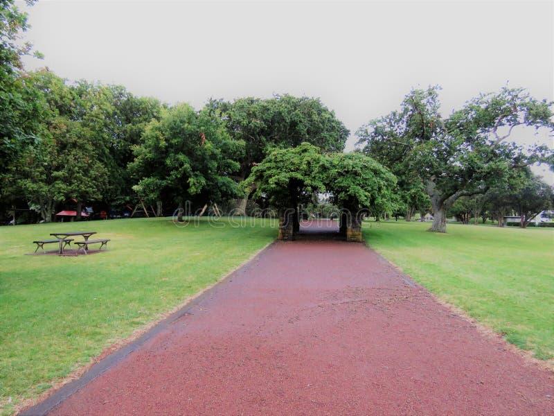 Один домен холма дерева стоковая фотография