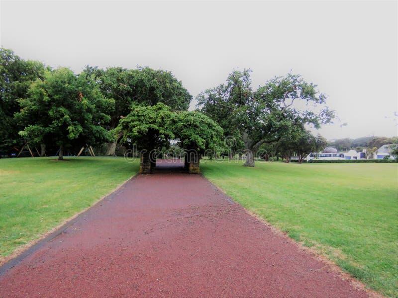 Один домен холма дерева стоковые изображения