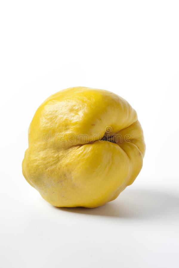 один желтый цвет айвы весь стоковые изображения