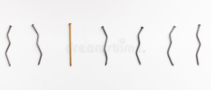 Один золотой ноготь среди изогнутых ногтей на белой предпосылке стоковые фотографии rf