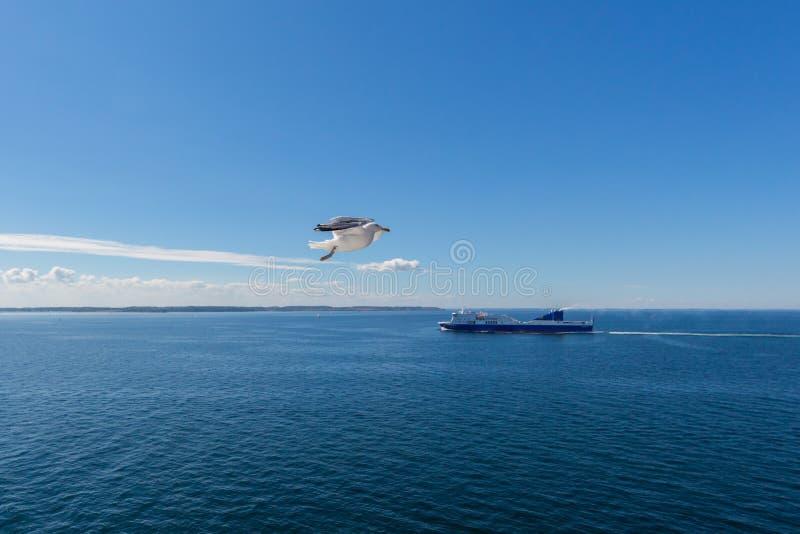 один чайка в полете с кораблем, голубое облачное небо и море стоковые фотографии rf