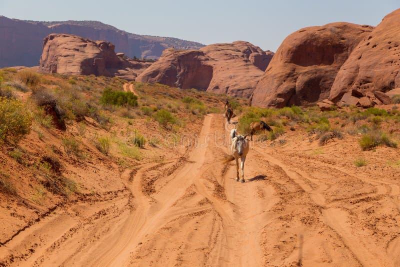 Одичалая лошадь мустанга в пустыне в долине памятника стоковое фото
