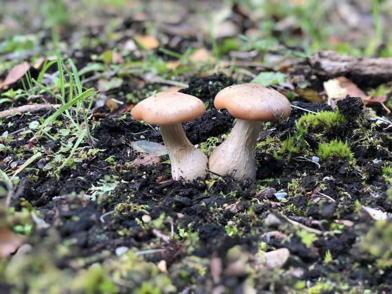 Одичалые грибы в лесе стоковые фото