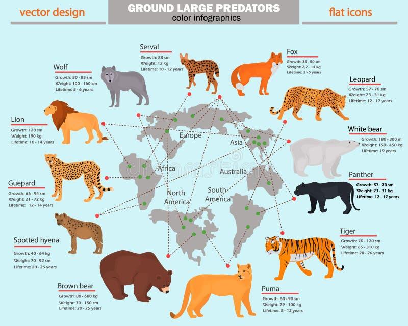Одичалые хищники, их среда обитания, рост, вес и долговечность красят infographics бесплатная иллюстрация