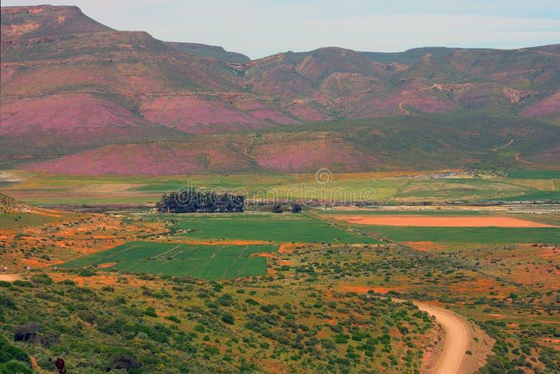 Одичалые цветки, долина Biedouw, Южная Африка. стоковая фотография rf