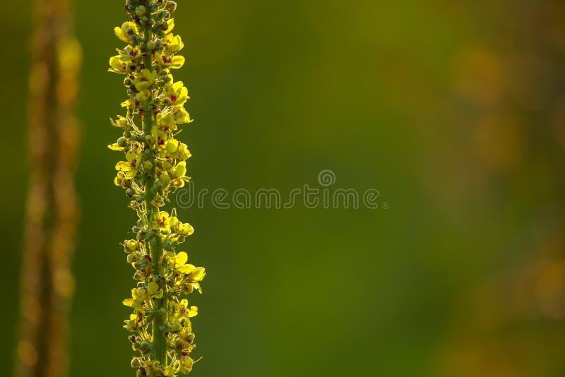 Одичалые цветки на зеленой предпосылке стоковые изображения rf