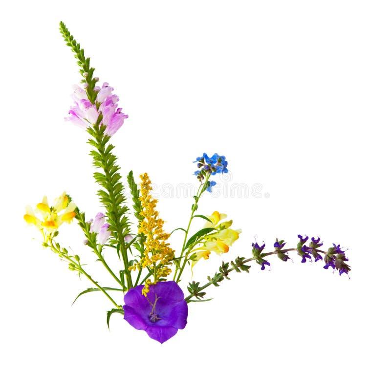 Одичалые цветки стоковое фото rf