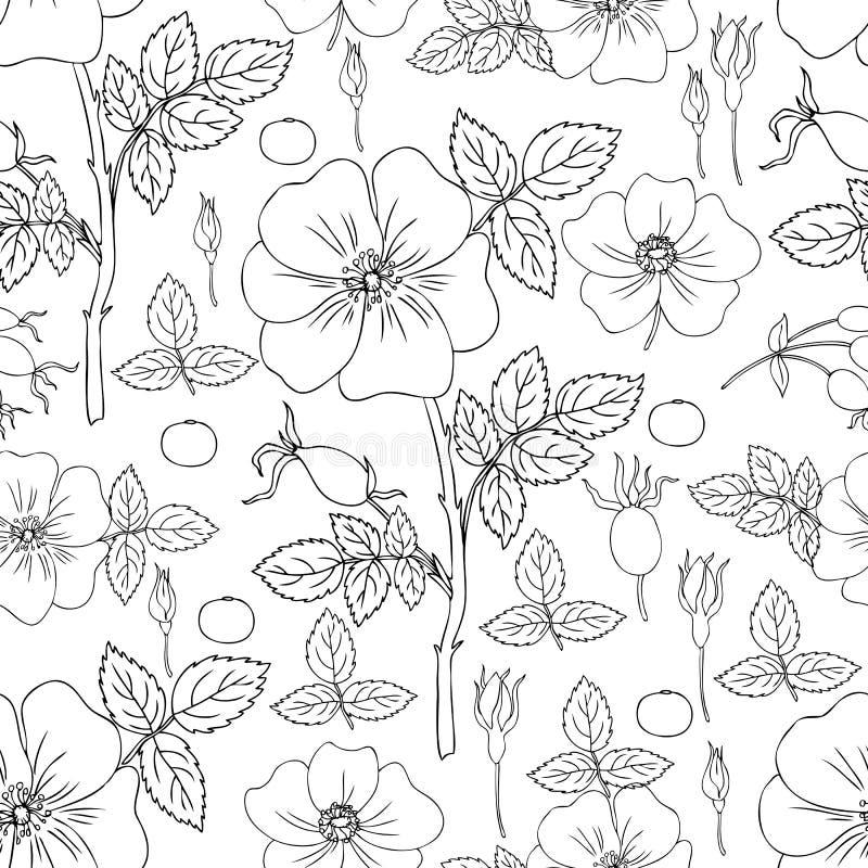 Одичалый поднял, briar, рука нарисованная ягода dogrose, иллюстрация вектора листьев изолированная на белой предпосылке, безшовно иллюстрация штока