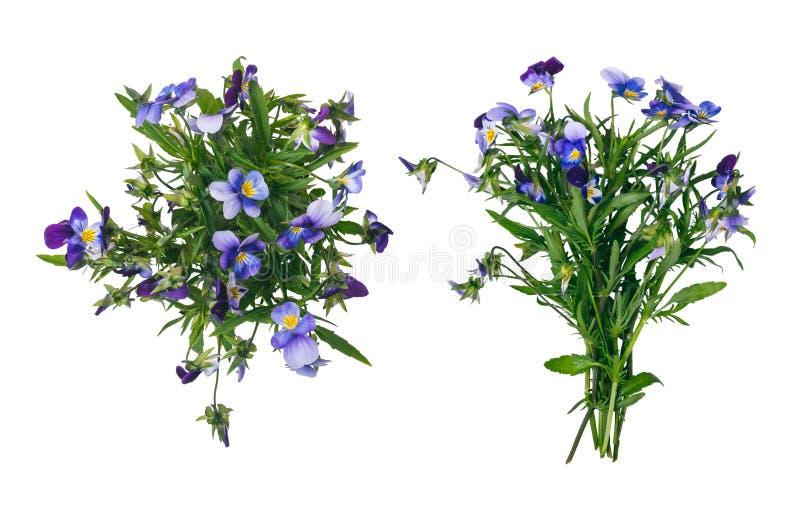 Одичалый фиолетовый букет цветка изолированный на белизне стоковое изображение rf