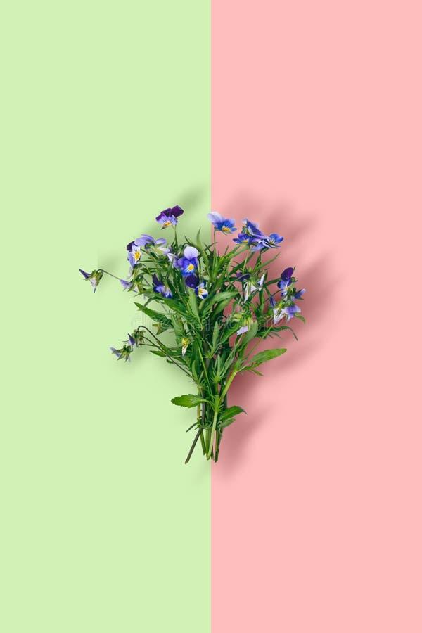 Одичалый фиолетовый букет цветка на предпосылке пастельного цвета стоковое изображение rf