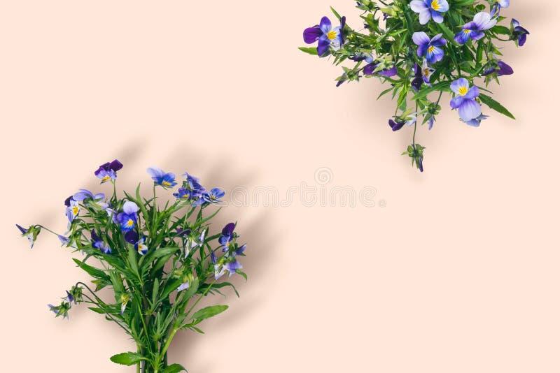 Одичалый фиолетовый букет цветка на предпосылке пастельного цвета стоковая фотография